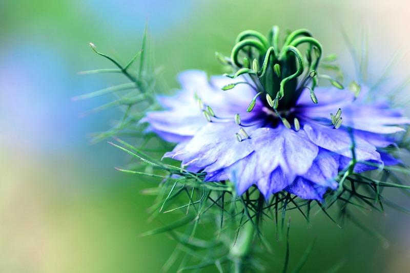 flowers-1184528_1280